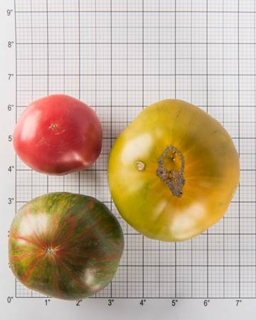 Tomatoes-Heirloom-Size-Grid