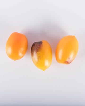 Tomatoes-Toybox-Indigo-Kumquat-Isolated