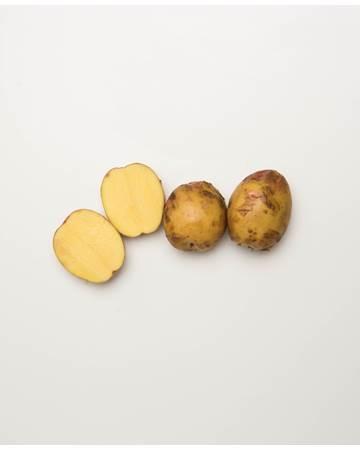 Potato-Gullauga-B-1-of-1