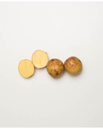 Potato-Gullauga-C-1-of-1