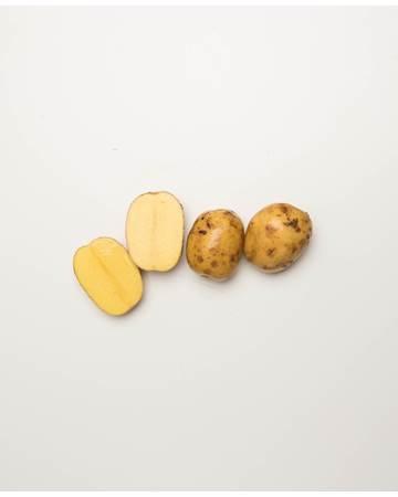 Potato-Yellow-Creamer-B-1-of-1