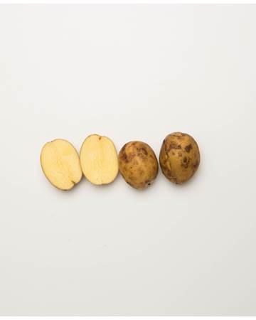 Potato-Yellow-Creamer-C-1-of-1