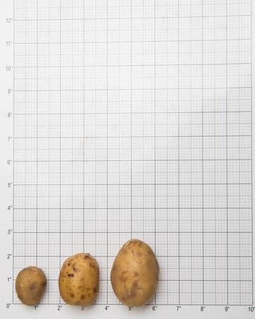 Potato-Yellow-Creamer-Size-1-of-1